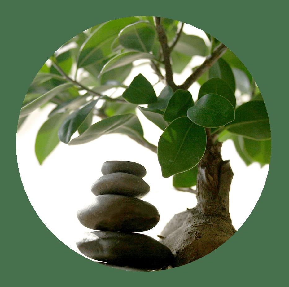 Meditation, Workshops, Zielgruppe, Offene Meditationsgruppe, Über, kontakt